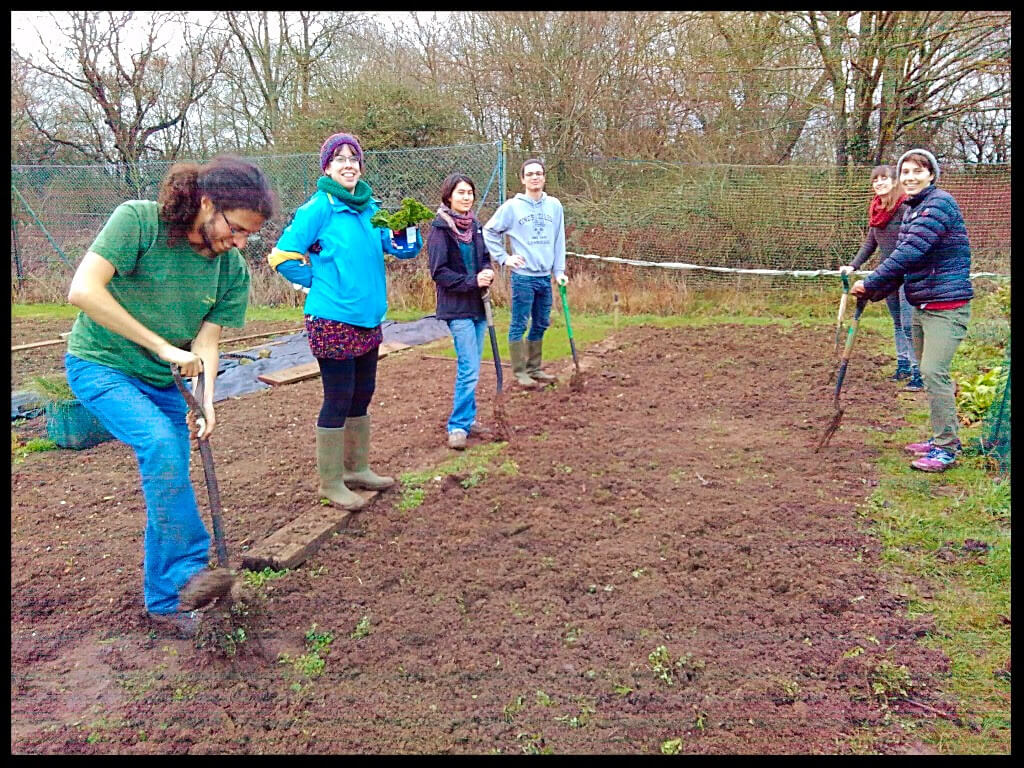 digging green manure jan 2017